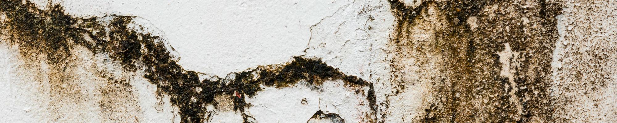 Mauerabdichtung: Von Außen drückendes Wasser, Abdichtung, Mauerwerks Verfestigung, uvm.